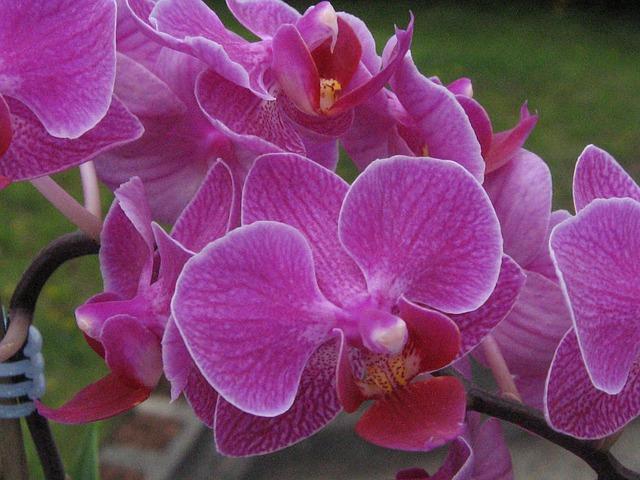 květy orchideje