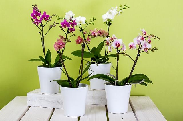 čtyři orchideje